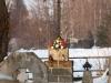 Łęka Siedlecka cmentarz wojenny nr 210