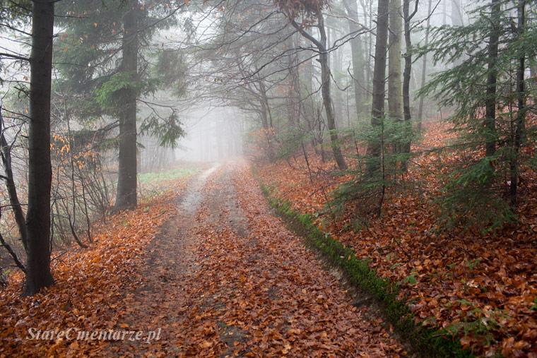 las w Jodłowej