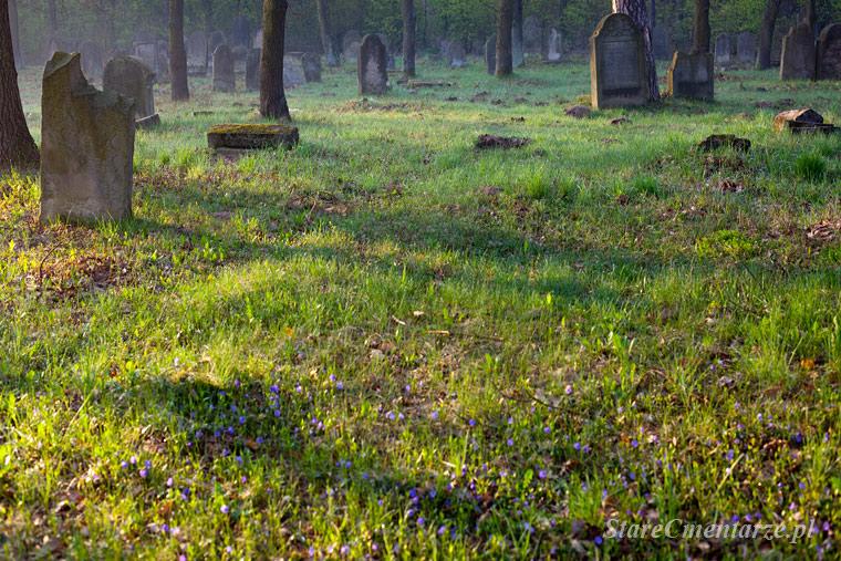 Szczucin cmentarz żydowski